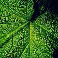 Green Ribbons Of Life by Roe Rader