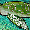 Green Sea Turtle by Laura Barbosa