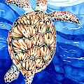 Green Sea Turtle Surfacing by Pauline Walsh Jacobson
