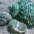 Green Seashells by Randy Walton