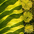 Green Silk 03 by Rick Piper Photography