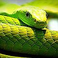 Green Snake by Greg Thiemeyer