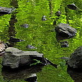 Green Stream by Joshua Bales