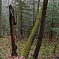 Green Timber by Jake Donaldson