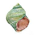 Green Turbo Shell by Amy Kirkpatrick