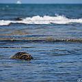 Green Turtle Surf by Joan Wallner