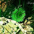 Green Urchin by Safe Haven Photography Northwest