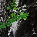 Green by Valerie Loop