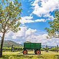 Green Wagon And Vineyard by Jess Kraft