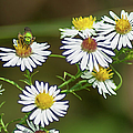 Green Wasp And Daisies by Optical Playground By MP Ray