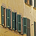 Green Window Shutters Of Florence by David Letts