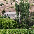 Green Wine Yard by Sotiris Filippou
