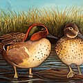 Green Winged Teal by Rick Huotari