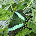 Green Wings 2 by Shari Nees