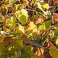 Green Yellow And Dry Leaves by Alain De Maximy
