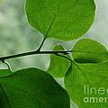 Green Zen by Kathi Shotwell