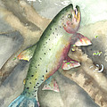 Greenback Cutthroat Trout by Kimberly Lavelle