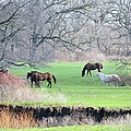 Greener Pastures by Bonfire Photography