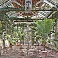 Greenhouse Splendor by Elin Mastrangelo