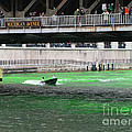Greening The Chicago River by Ann Horn
