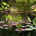 Greens On A Pond 2 by Mark Steven Burhart