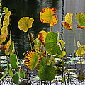 Greens On A Pond by Mark Steven Burhart