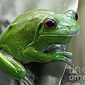 Greeny 5 by Ben Yassa