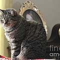 Greeting Card Cat by Michelle Powell