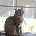 Gretchen Sitting In The Window by Michelle Powell
