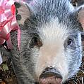 Gretel Piggy