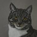 Grey Cat by Veikko Suikkanen