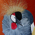 Grey Crowned Crane by Elaine Booth-Kallweit