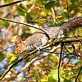 Grey Squirrel - Impressions by Susie Peek