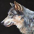 Grey Wolf by J W Baker