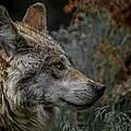 Grey Wolf Profile 3 by Ernie Echols
