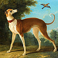 Greyhound In A Landscape by Jean-Baptiste Oudry