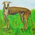 Greyhound Posing by Lucille  Valentino