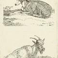 Greyhounds And Goat, Jan Dasveldt by Artokoloro