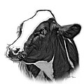 Greyscale Cow Holstein - 0034 Fs by James Ahn