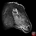 Greyscale Polled Dorset Sheep - 1643 F by James Ahn