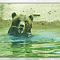 Grizzly Bath by Walter Herrit