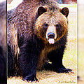 Grizzly Bear 2 by Walter Herrit