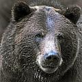 Grizzly Bear by Elaine Malott