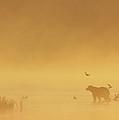 Grizzly Bear In Morning Fog by Matthias Breiter