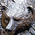 Grizzly by Charlie and Norma Brock