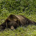 Grizzly Cub  #0863 by J L Woody Wooden