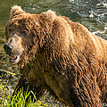 Grizzly On The River Bank by Joan Wallner
