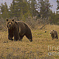 Grizzly Sow And Cub  #6382 by J L Woody Wooden