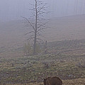 Grizzly Sow And Twins  #5817 by J L Woody Wooden
