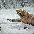 Grizzly Stare by Joan Wallner